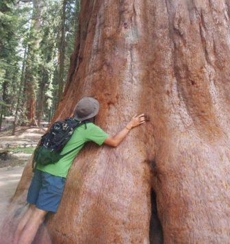 【アメリカ西海岸レンタカー旅 5】ジャイアントセコイアの森と、熊と、山火事。
