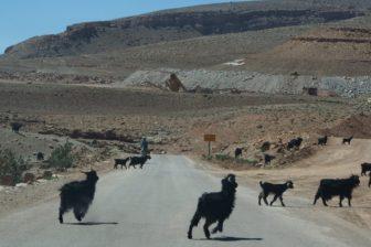 【モロッコレンタカー旅 その4】3日目のトドラ渓谷、4日目のサハラ砂漠。