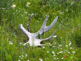 【アメリカ西海岸レンタカー旅 8】グランドティトン国立公園と、野生動物たち。