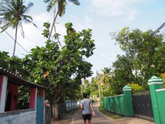 漁師町ネゴンボ。スリランカのお酒の話しと、満月の禁酒日「フルムーン・ポヤ・デー」